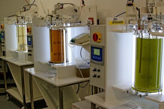 Laboratoire d'Etude des MicroAlgues - LEMA